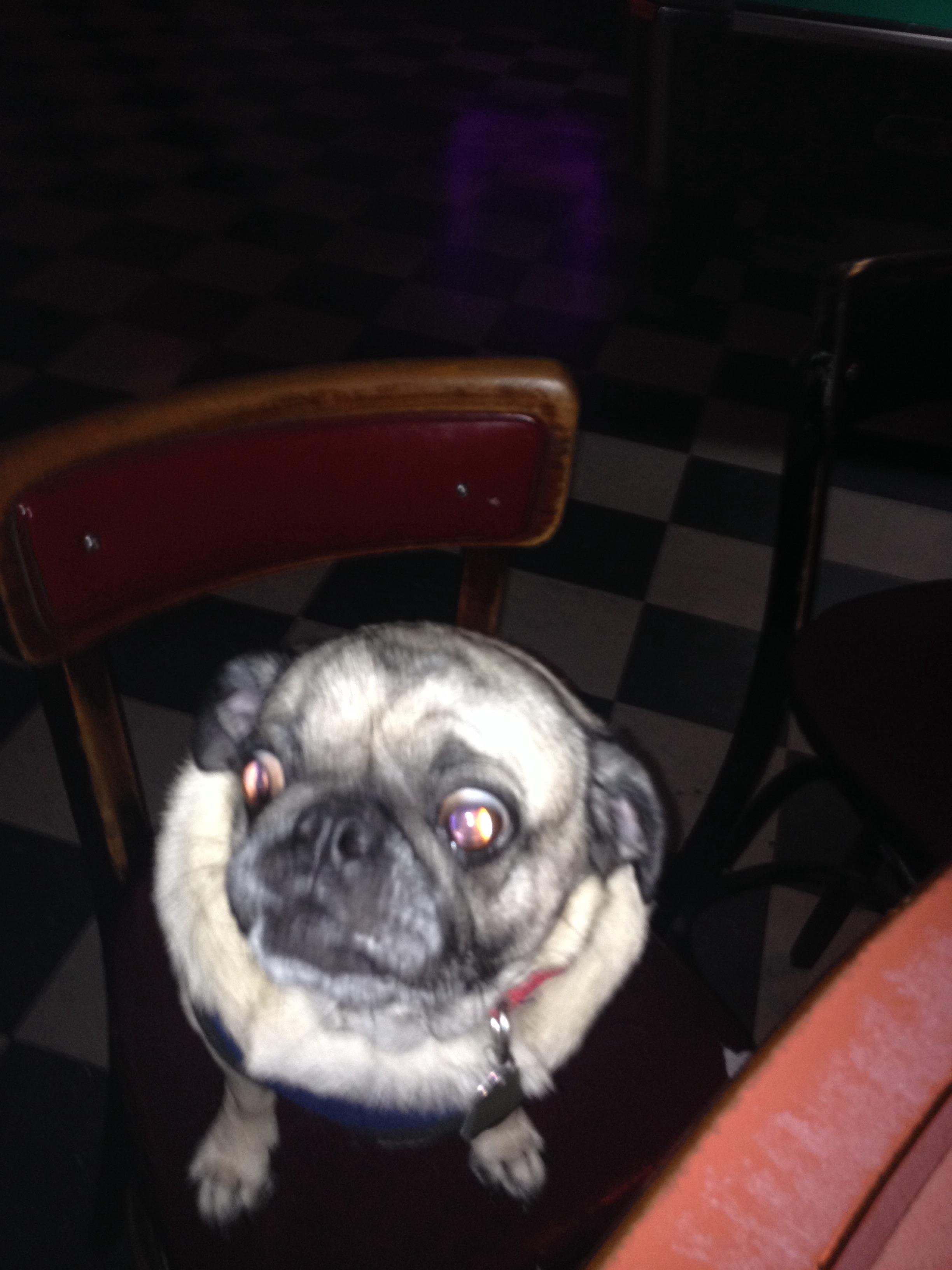 Pug Life!